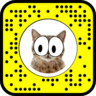 augmented reality snapchat filter that tracks cats face